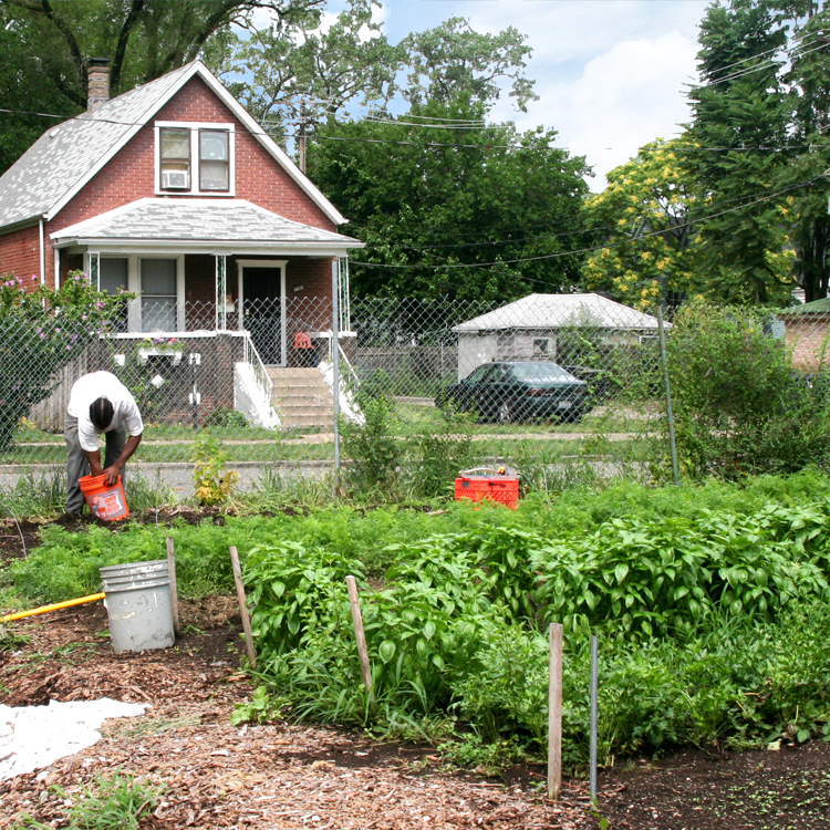 Growing Home, an organic farm, located amidst properties in Englewood.